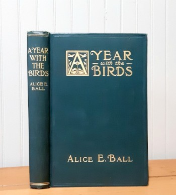 Image for A Year with the Birds